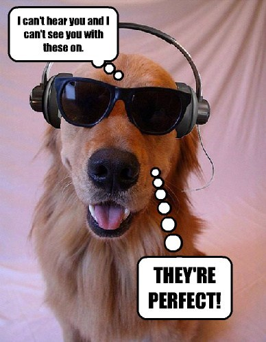 cool,dogs,sun glasses,puns