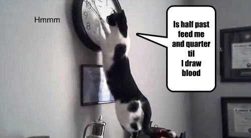 Cats clocks funny time - 8133104896