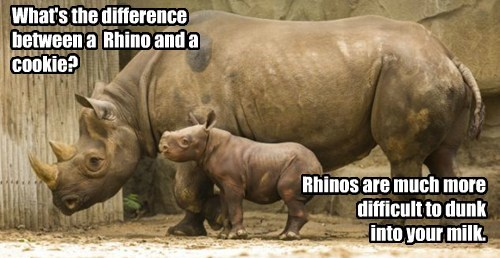 What's the difference between a Rhino and a cookie? Rhinos are much more difficult to dunk into your milk.