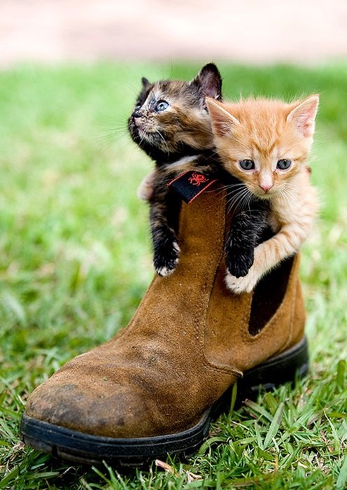 kitten boots cute Cats - 8133118464