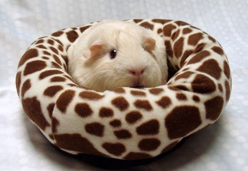 cute guinea pig beds - 8133126400