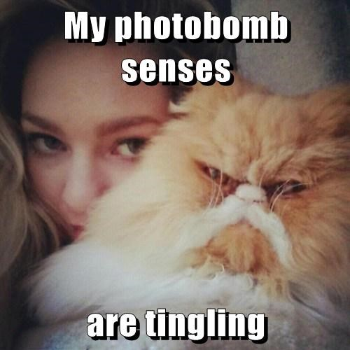 Cats grumpy photobomb selfie - 8133157120