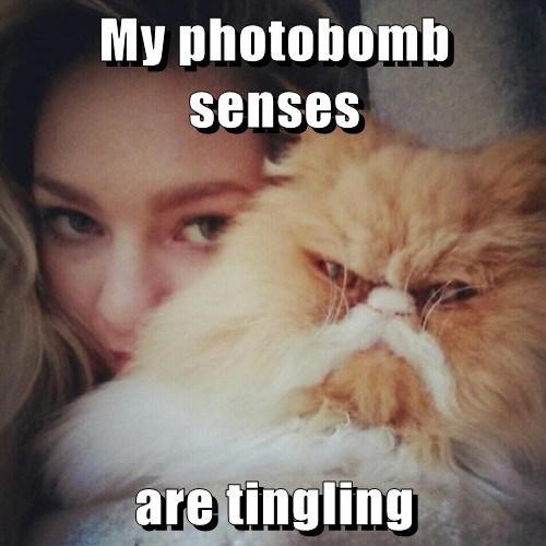 Cats grumpy photobomb selfie - 8133157120