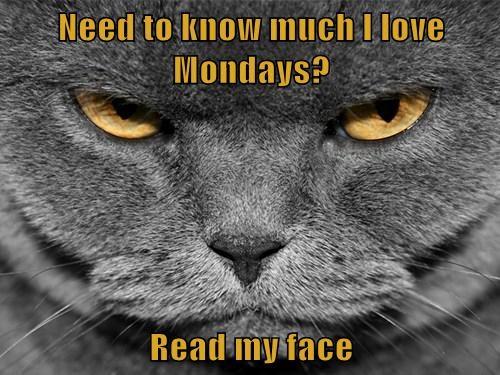 grumpy mondays Cats funny - 8133683968