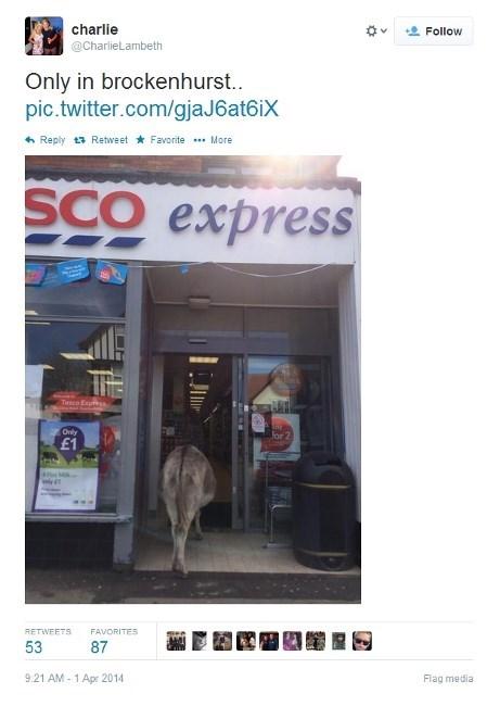 news donkey animals - 8133991424