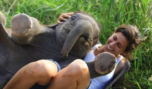 Babies cute elephants snuggle - 8134624256