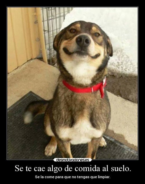 Memes animales perros - 8135271936