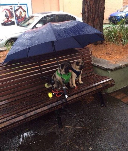dogs love umbrella rain - 8135320064