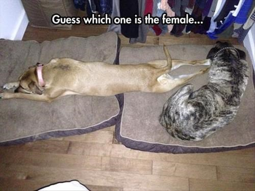 dogs men vs women funny - 8135331072