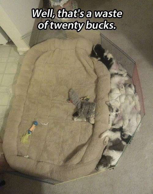 beds,dogs,funny,puppies