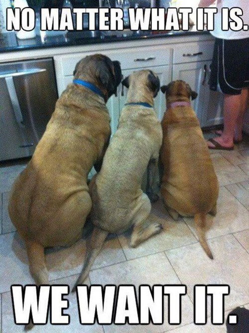 begging dogs funny noms - 8135352320