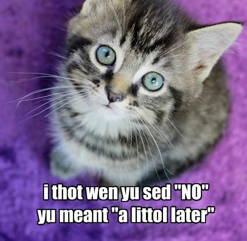 kitten cute beg Cats - 8135361792