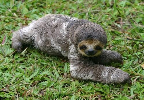 Babies cute sloths