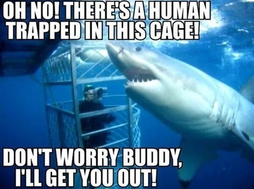 scuba misunderstood sharks funny - 8135367168