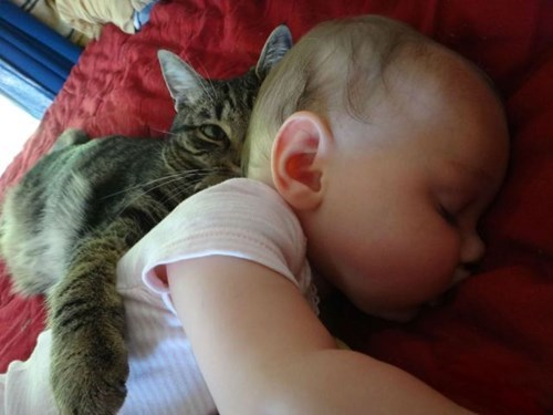 baby cute parenting Cats - 8135425536