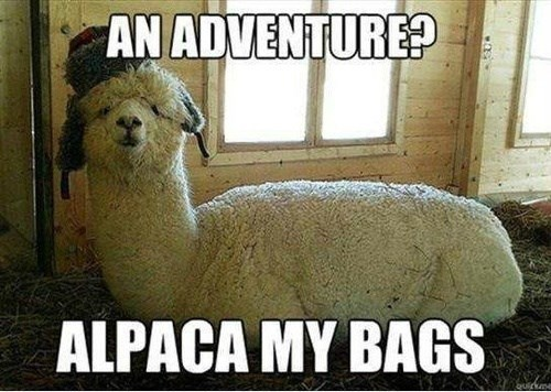 alpaca,puns,adventure