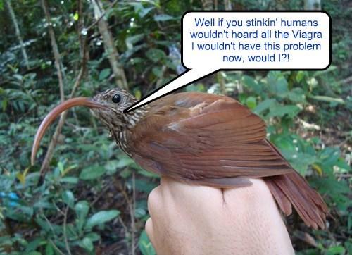 viagra birds puns funny - 8135492608