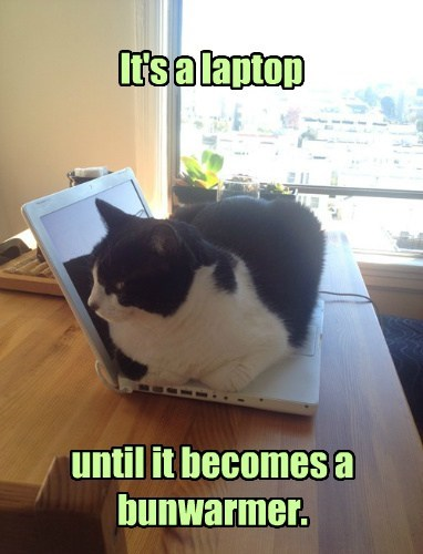 computers Cats funny warm - 8135652352