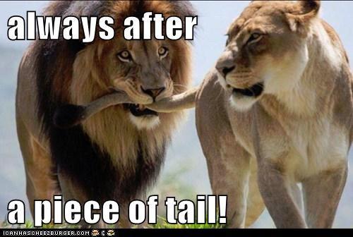 lions flirting puns - 8135671808