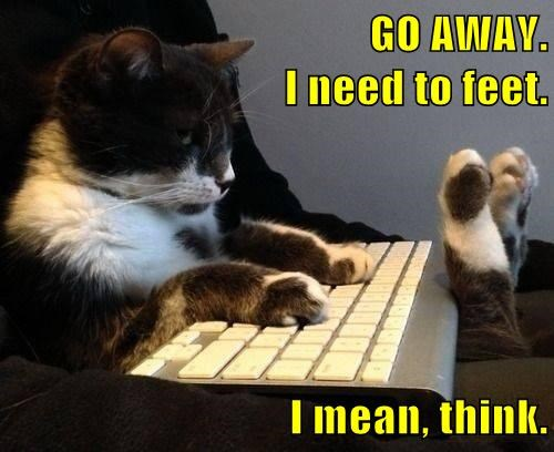 computers feet think Cats funny - 8136628992