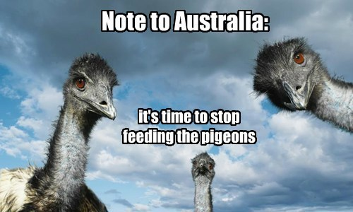 Note to Australia: it's time to stop feeding the pigeons