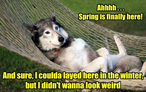 Ahhhh . . . Spring is finally here! And sure, I coulda layed here in the winter, but I didn't wanna look weird