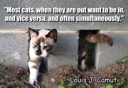 """Most cats, when they are out want to be in, and vice versa, and often simultaneously."" ~Louis J. Camuti"