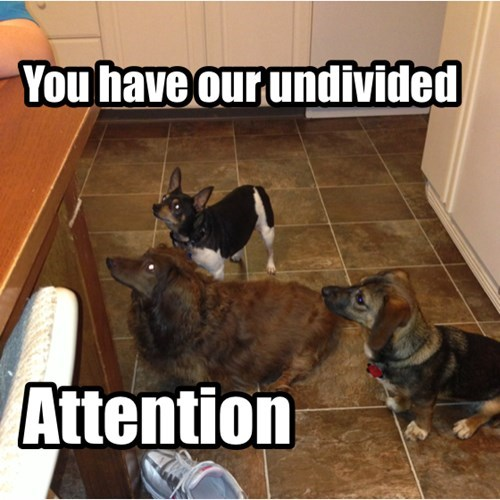 dogs attention begging funny