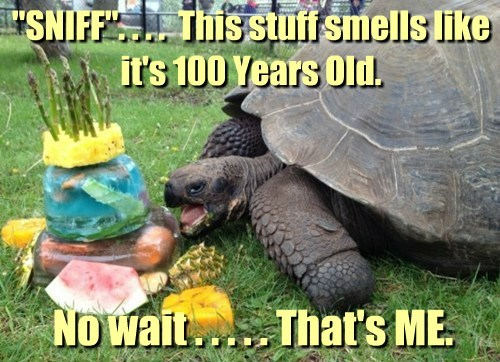 cake old tortoise smelly
