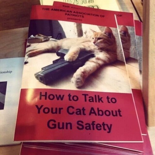 guns gun safety Cats - 8138156032