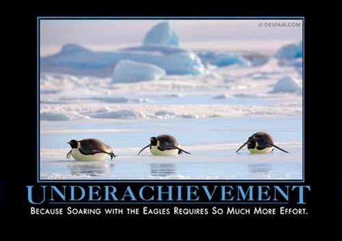 penguins awesome funny underachieving - 8138241024