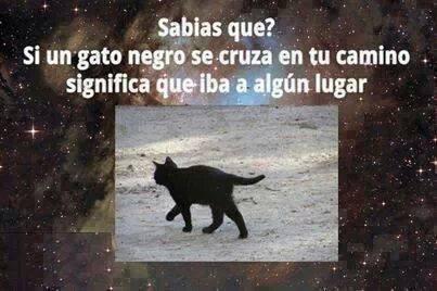 gatos bromas Memes animales - 8138252032
