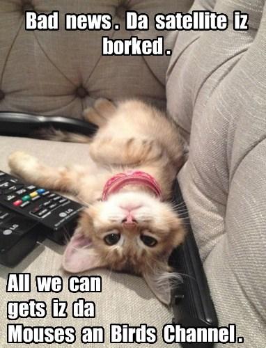 satellite TV Cats - 8138287616
