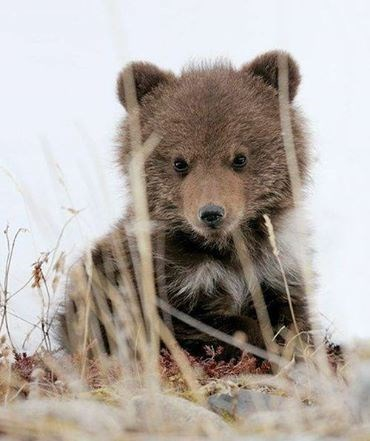 spring cute bear cubs