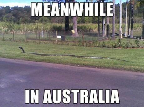 wtf australia snakes huge - 8138529280