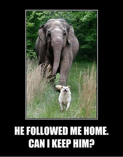 dogs pets cute elephants funny - 8138532864