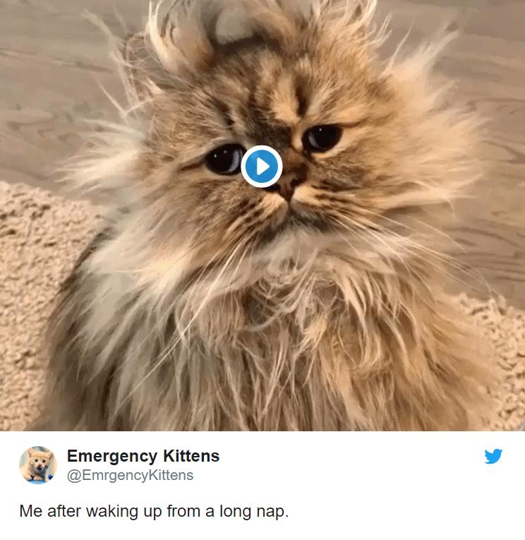 cute posts tweets Cats - 8139013