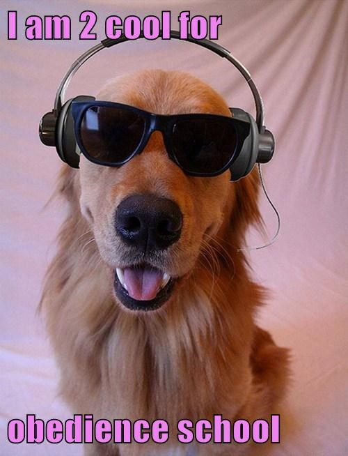 cute,dogs,cool,sunglasses