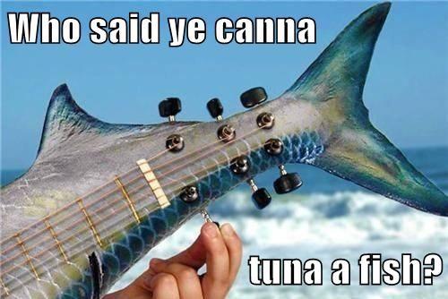 tuna Music puns fish funny - 8139512320