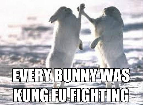 bunnies,cute,funny,puns,Music