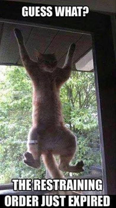 restraining order Cats funny weird - 8139652096