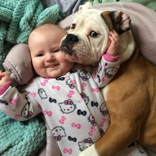 Babies,dogs,cute,Photo,funny