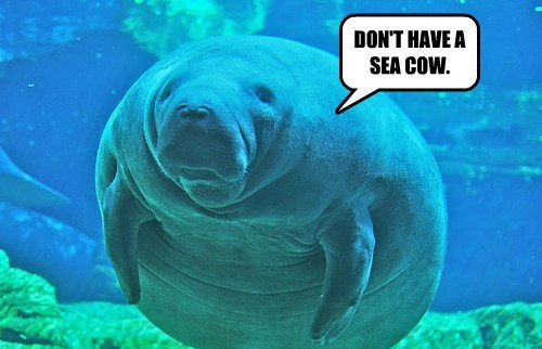 manatee puns Sea Cow funny - 8139727104