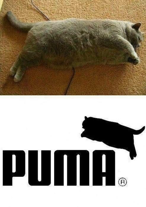 gatos Memes curiosidades animales fotos - 8139756288