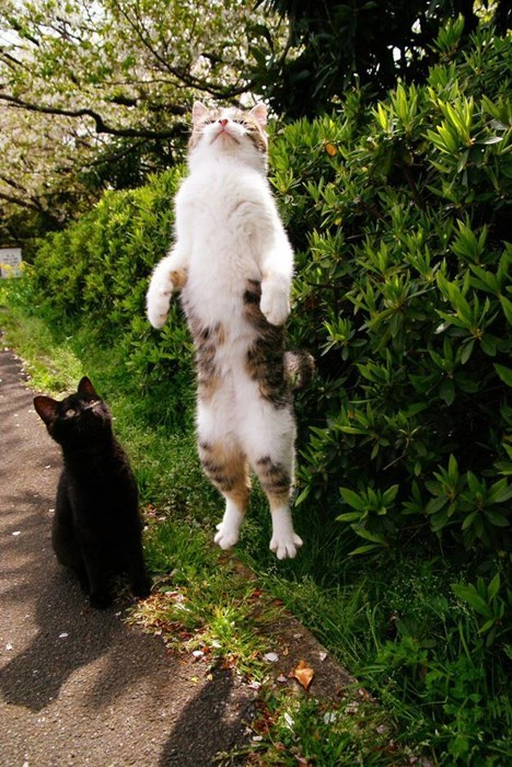 so cute,Cats,funny,flying