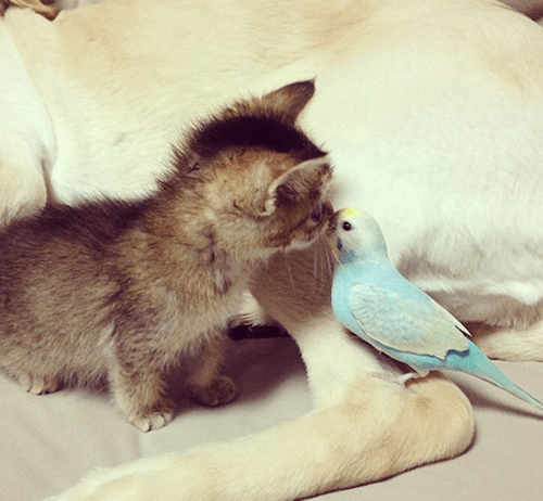 dogs kitten birds friends cute Cats - 8139781120