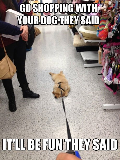 dogs shopping funny They Said - 8139800320