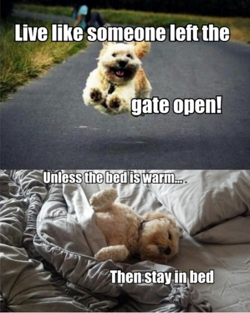 dogs life Words Of Wisdom - 8139803392