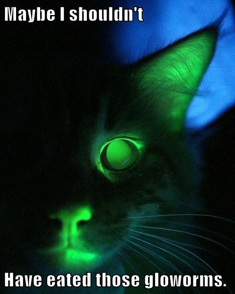 cat kitten weird glow worm - 8139936512