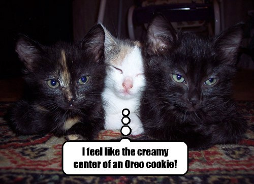 snuggle cute oreo cookies - 8140103424
